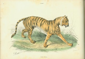 "Left-hand side of a sample page spread depicting the proper coloration for ""Tigre Royal"""
