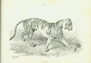 Right-hand side of the same page spread, offering the student a chance to try her hand at painting the tiger.