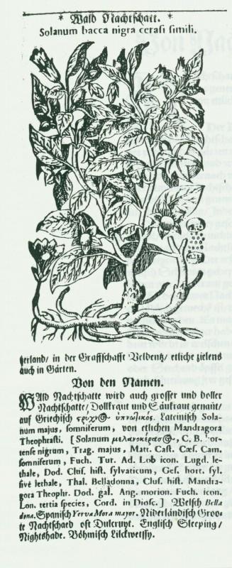 """Reproduced from Tabernaemontanus, J.T.  """"Von Wald Nachshatten,"""" Neu Volkommen Krauterbuch. 1731."""
